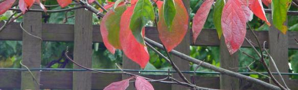Offene Pforten Geöffnete Gärten In Deutschland Blick über Den