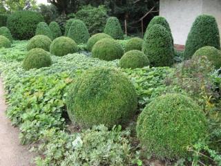Professionelle Gartenplanung, Gartenbau   Garten  Und  Landschaftsarchitekten Formschnitt Garten