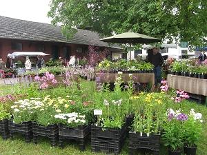 Pflanzenmarkt Knechtsteden