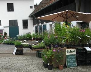 Pflanzentreffen Knechtsteden