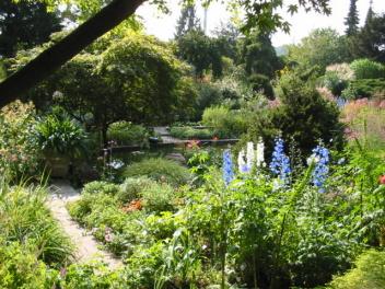 Rittersporn im Foerster Garten Potsdam-Bornim Foto Wolfgang Brandt