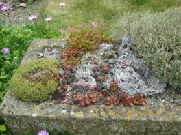 Bepflanzter Trog im Garten Woodpeckers / Cotswolds England Foto Maria Mail-Brandt