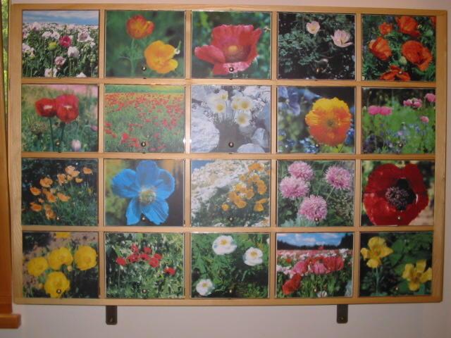 Mohnarten Plakat fotografiert im Mohnmuseum Ottenschlag
